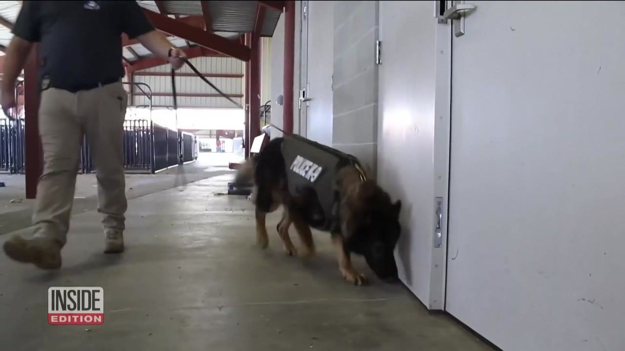 Inside Edition: In Depth - How a Bulletproof Vest Saved This Brave Police Dog's Life
